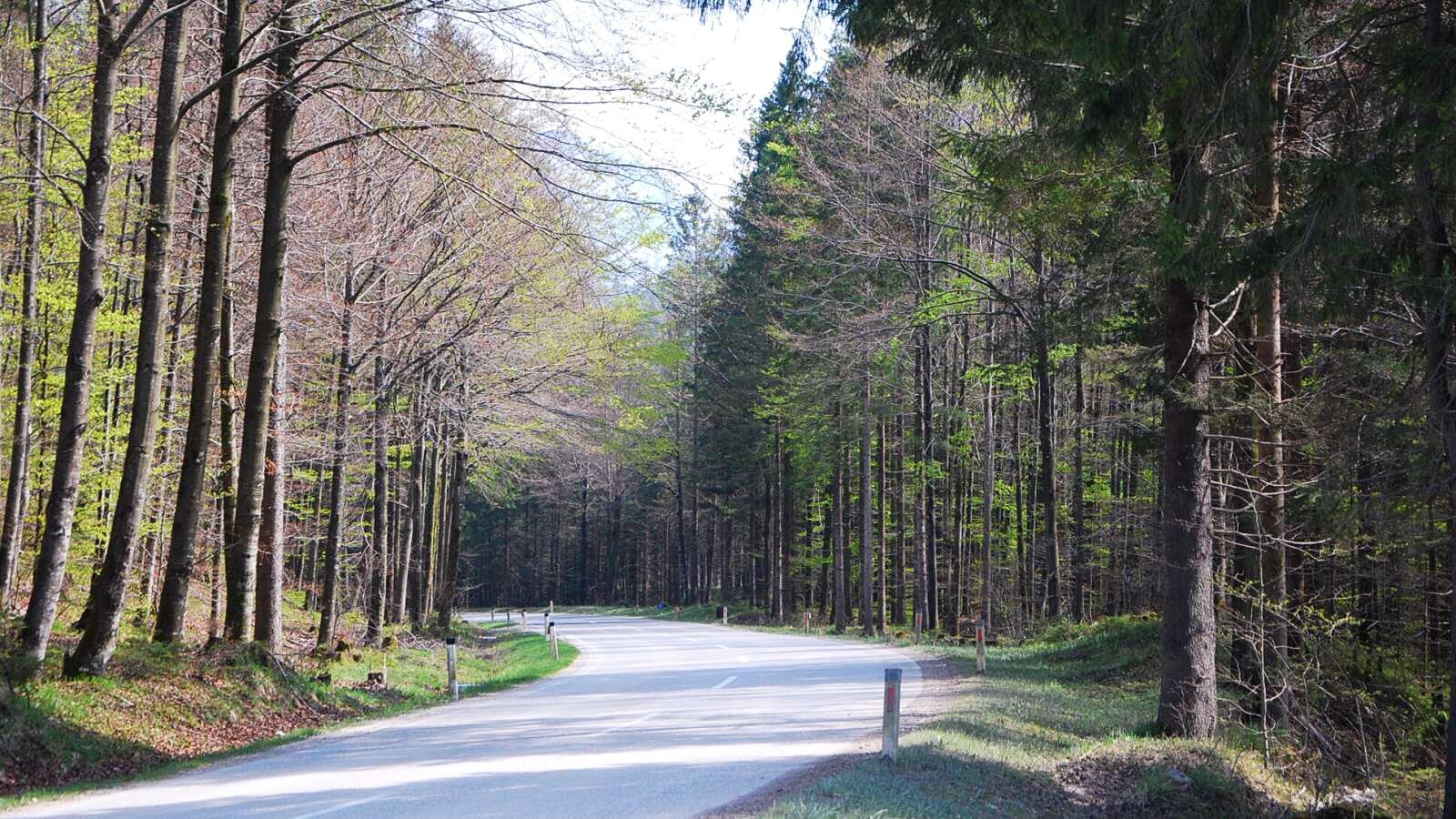 Krásná silnice lesem