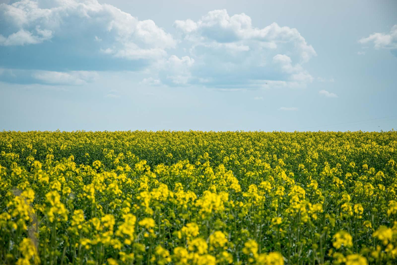 10 let s biopalivy